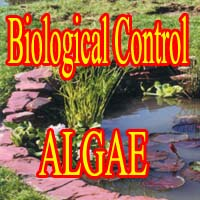 Products for Biological Control of Algae