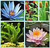 Economical Complete Aquatic Plant Collections: Water Lilies and Bog Plants