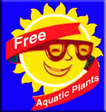 Free Aquatic Plants