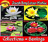 Economical Hardy Water Lily Collections