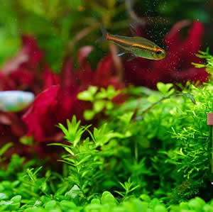 Oxygenating Pond Plants