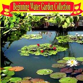 Beginning Water Garden Collection