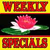Weekly Specials (Click Here) and Videos