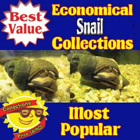 Economical Snail Collections