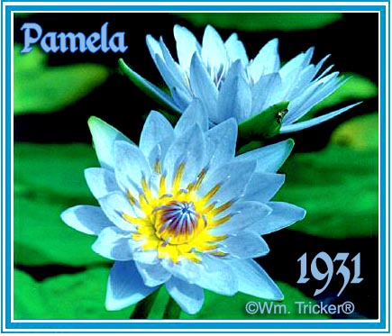 Pamela Tropical Water Lily