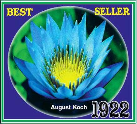 August Koch - Tropical Water Lily