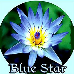 Blue Star - Tropical Water Lily
