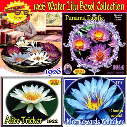 1925 Water Lily Collection - 3 Water Lilies