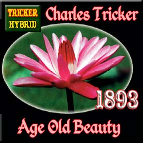 Charles Tricker - Tricker Night Blooming Hybrid