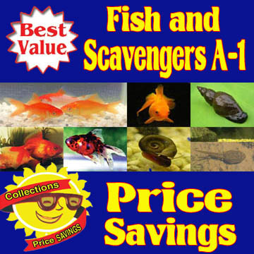 Fish and Scavengers A-1 Collection