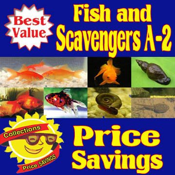 Fish and Scavengers A-2 Collection