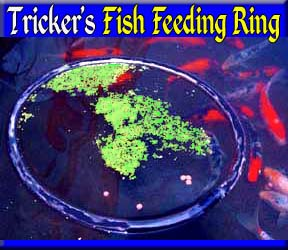 Fish Feeding Ring