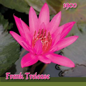 Frank Trelease - Night Blooming Lily