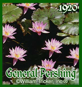 General Pershing - Water Lily