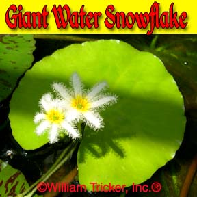 Giant Water Snowflake