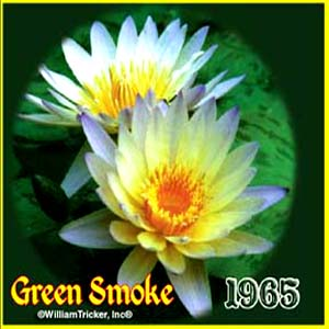 Green Smoke - Tropical Water Lily