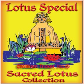 Sacred Lotus Collection - 2 Lotus