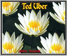 Ted Uber - Water Lily