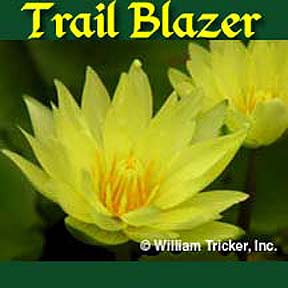 Trail Blazer - Tropical Water Lily