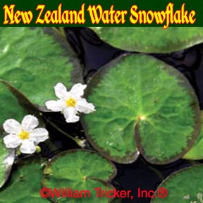 New Zealand Water Snowflake