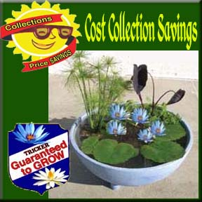 Tub Plant Collections