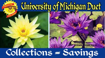University of Michigan Duet - 2 Water Lilies