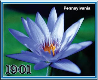 Pennsylvania - Tropical Water Lily