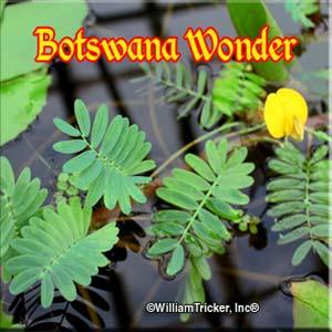 Botswana Wonder William Tricker Inc