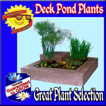 Plant Collection for Deck Pond