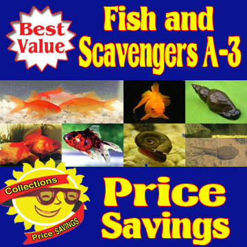 Fish and Scavengers A-3 Collection