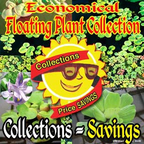 Economical Floating Plant Collections