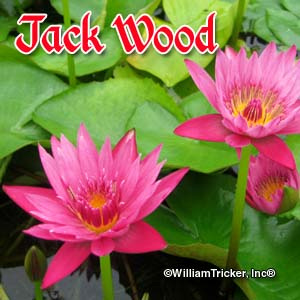 Jack Wood - Water Lily
