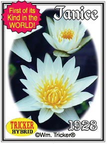Mottled Trio Leaf Collection - 3 Tropical Water Lilies
