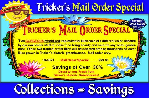 Tricker's Mail Order Special - 2 Lilies