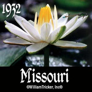 Missouri - Night Blooming Lily