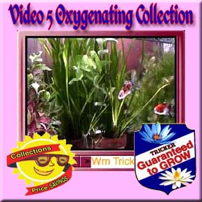 Video 5 Oxygenating Plants Collection