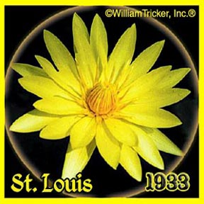 St Louis - Tropical Water Lily