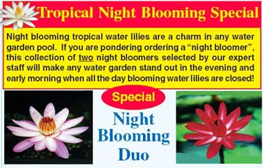 Night Blooming Duo Special